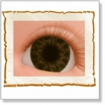 7501 - Eyes :  HQ acryl ogen Chocolate Brown