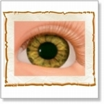 7502 - Eyes :  HQ acryl ogen Hazel
